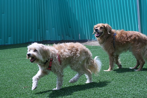 Dog Day Care Training And Boarding Glendale Pet Resort